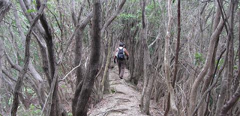 熊野脇道・姫越山のウバメガシ林と語り部ガイド