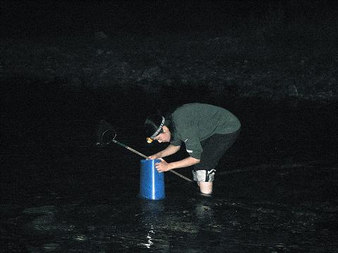 夜の銚子川でエビかきをする植野めぐみ