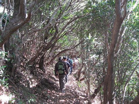紀伊半島みる観る探検隊、紀北町島勝浦の照葉樹林を歩くツアー参加者