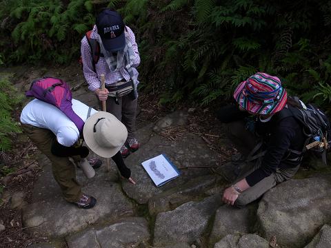 熊野古道伊勢路・馬越峠の石畳にてガイドとツアー参加者