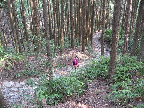 熊野古道伊勢路・馬越峠の下りにてツアー参加の女性
