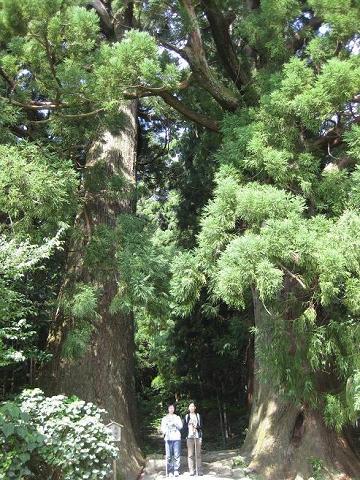 熊野古道大門坂の夫婦杉にて