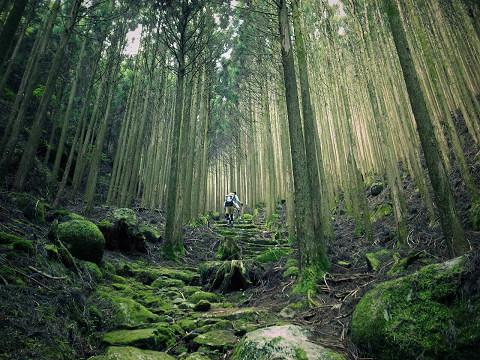 熊野古道中辺路・大雲取越の石畳と森林を歩く