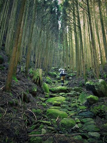 熊野古道中辺路・大雲取越を越前峠に向かうガイドとツアー参加者