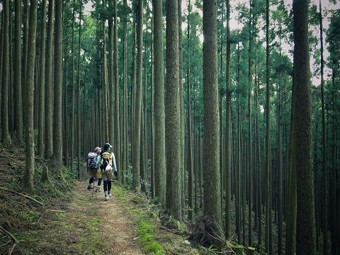 熊野古道中辺路・大雲取越の森林を歩くツアー参加者