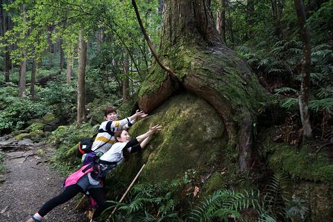 熊野古道伊勢路・馬越峠のお尻ヒノキとツアー参加女性2人