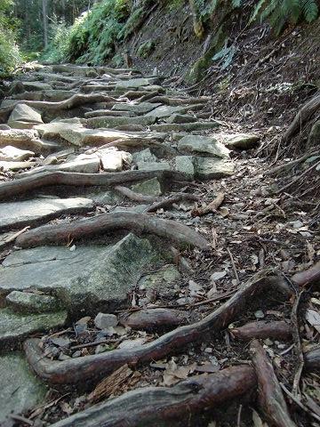 発掘された石畳