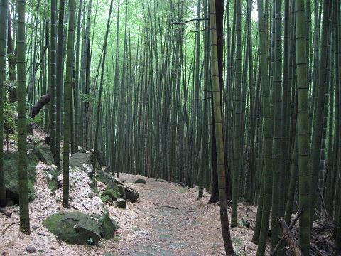 熊野古道大吹峠