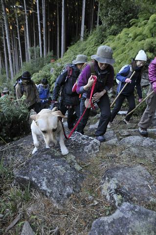 熊野古道伊勢路・八鬼山越えを歩く犬とツアー参加者たち