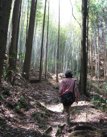熊野古道中辺路・曼荼羅の道を歩くガイド西浦康代