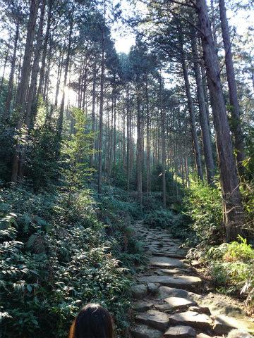 熊野古道伊勢路・馬越峠道
