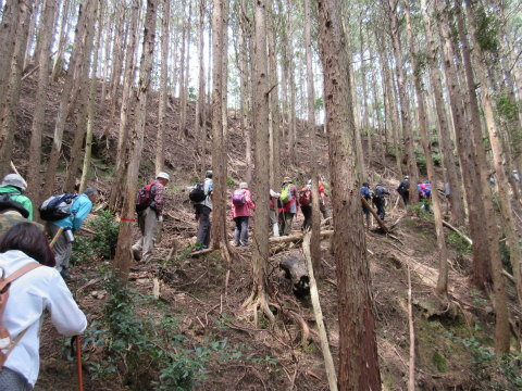 熊野古道伊勢路・馬坂(のこぎり坂)を登るツアー参加者たち