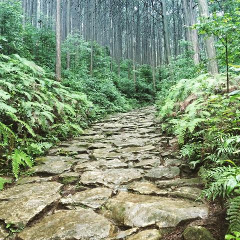 熊野古道・馬越峠道