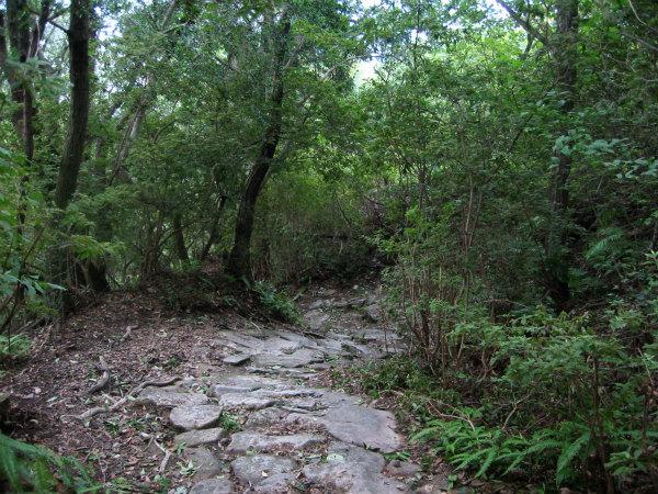 熊野古道伊勢路・馬越峠の石畳と雑木林
