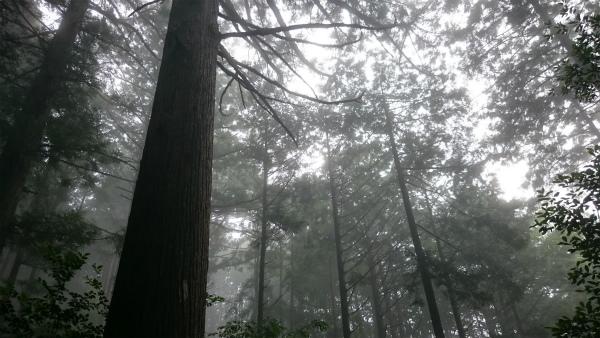 小雨の熊野古道馬越峠