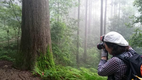 熊野古道女性一人旅応援プランの様子、馬越峠で霧と苔の写真を撮る