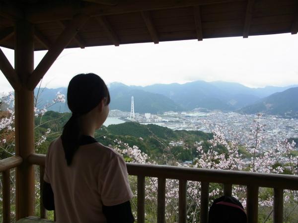 熊野古道女性一人旅応援プランの様子、桜咲く馬越峠から尾鷲市を眺める