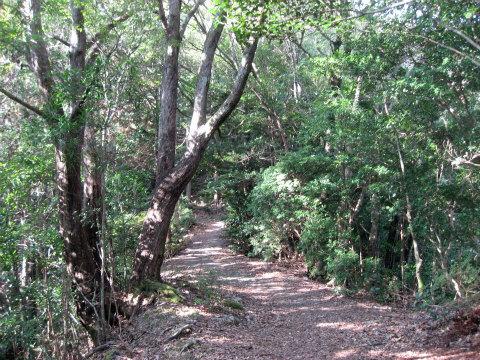 熊野古道中辺路・小雲取越と照葉樹林