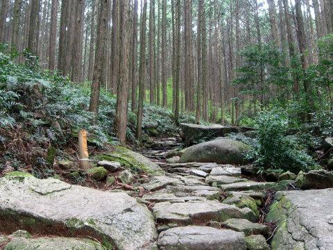 熊野古道伊勢路・馬越峠の石畳と森林