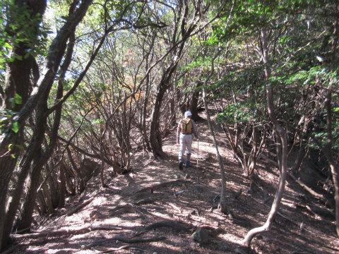 城の腰山から尾根を歩く語り部ガイド