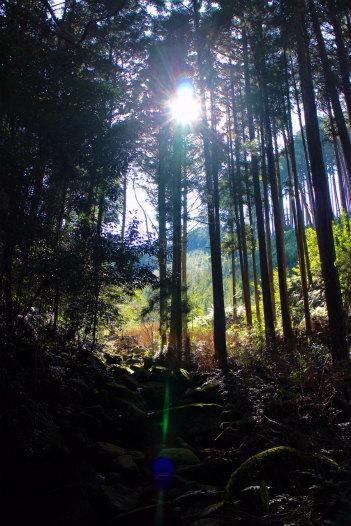 尾鷲ヒノキ林の木漏れ日