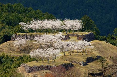 熊野市紀和町の赤木城跡の桜