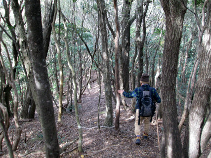 紀宝町井田のみさご岩からウバメガシの尾根道を歩く語り部ガイド