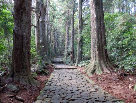 熊野古道大門坂の石畳と杉並木