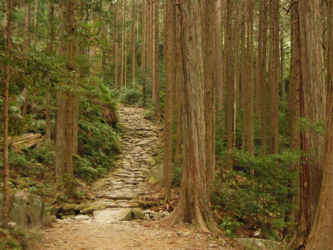熊野古道伊勢路・馬越峠の石畳