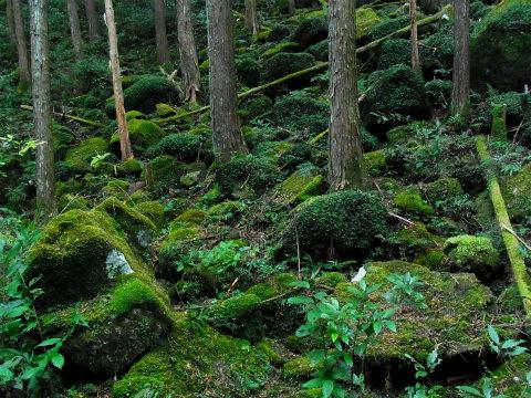 熊野古道伊勢路・曽根次郎坂太郎坂の明治道「曽根坂」の苔群生
