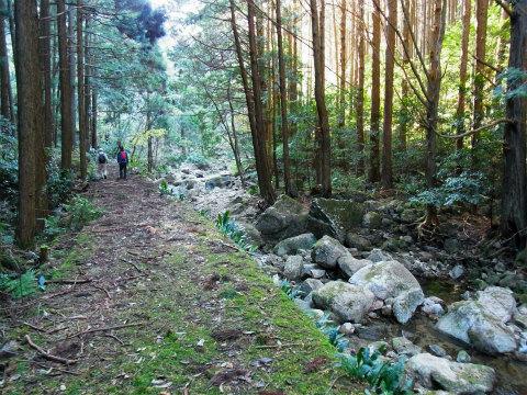 熊野古道伊勢路・曽根次郎坂太郎坂の明治道「曽根坂」の林道と苔