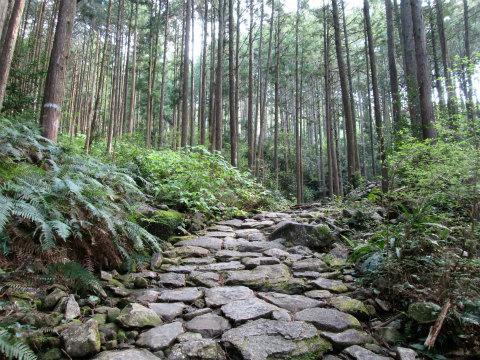 熊野古道伊勢路・馬越峠の石畳と尾鷲ヒノキ森林