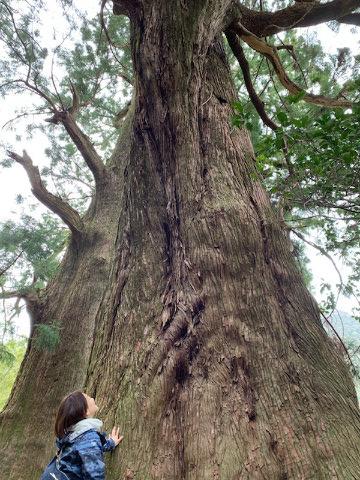 熊野古道大門坂の杉巨木と一人旅女性