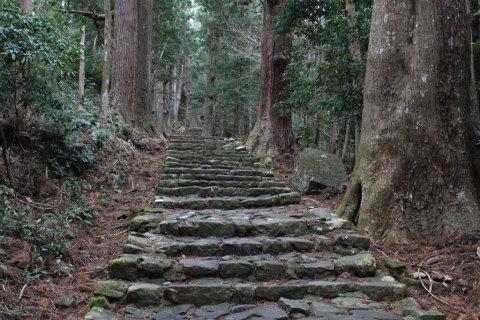 熊野古道大門坂の石畳と杉の巨木