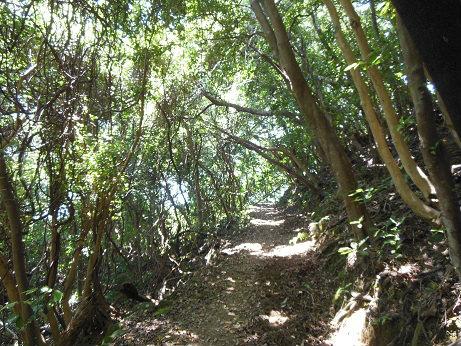 照葉樹林の中の楯ヶ崎遊歩道