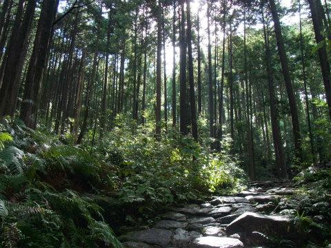 熊野古道伊勢路・馬越峠の森林と石畳