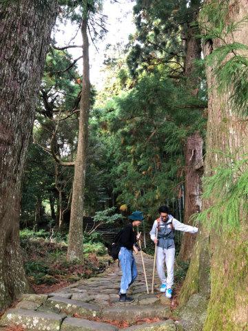 熊野古道大門坂の夫婦杉とツアー参加者