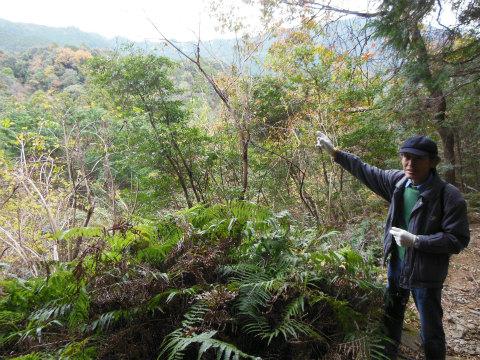 熊野古道伊勢路・横垣峠道にて説明する語り部ガイドの清水鎮一