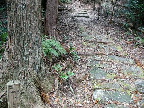 熊野古道伊勢路・横垣峠道の神木流紋岩の石畳