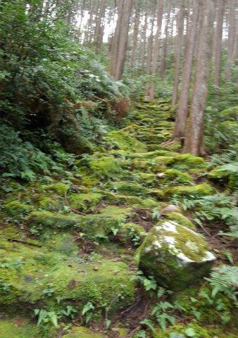 熊野古道伊勢路・三木峠の苔むす石畳