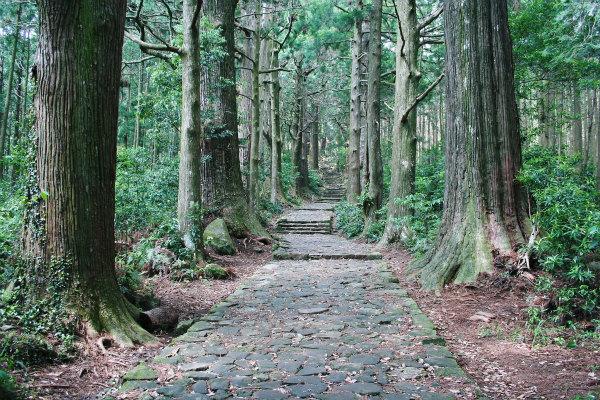 熊野古道中辺路・大門坂の石畳と杉並木