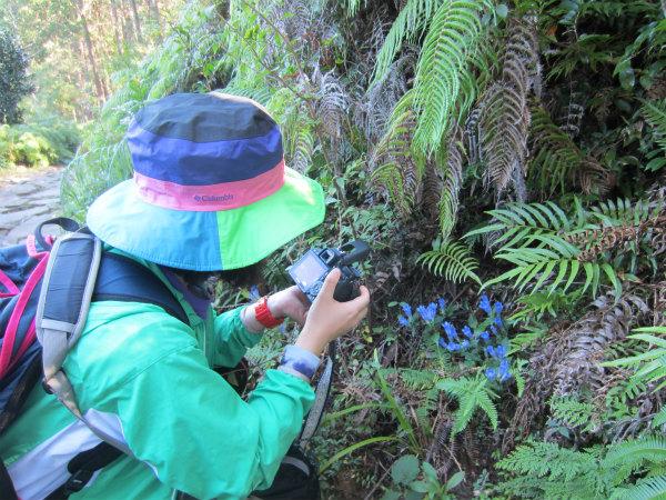 熊野古道女性一人旅応援プランの様子、馬越峠でアサマリンドウの写真を撮る