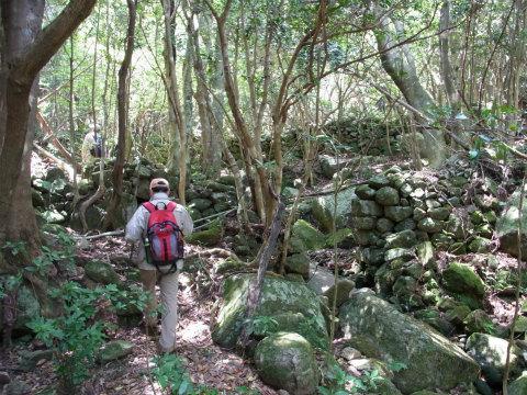 尾鷲市三木浦町の頼母集落跡の畑跡や猪垣とツアー参加者