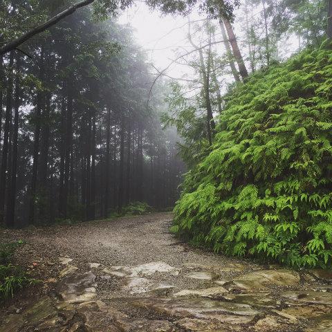 熊野古道伊勢路・馬越峠道と林道の交差点