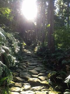 熊野古道伊勢路・馬越峠の石畳道と木漏れ日