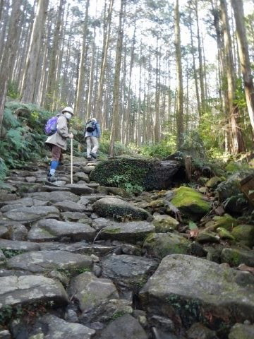 熊野古道伊勢路・馬越峠の石畳を歩く語り部ガイドとツアー参加女性