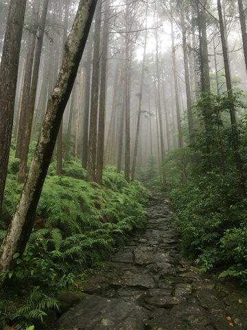 霧にけむる熊野古道伊勢路・馬越峠の石畳