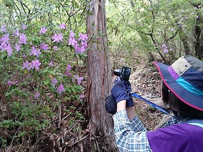 熊野古道でツツジの写真を撮る一人旅女性