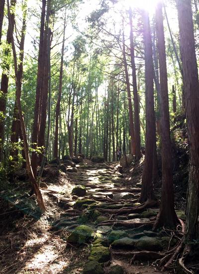熊野古道伊勢路・松本峠の石畳と木漏れ日