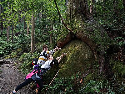 熊野古道伊勢路・馬越峠にて女性2人と尾鷲ヒノキ巨木